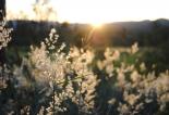 Sunbeam Backlit Grass seeds